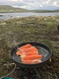 Fjellørret fra Hardangervidda